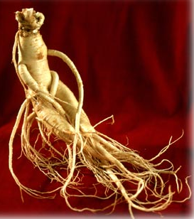 Ginseng – an adaptogenic herb that stimulates and relaxes the different bodily functions including the immune system